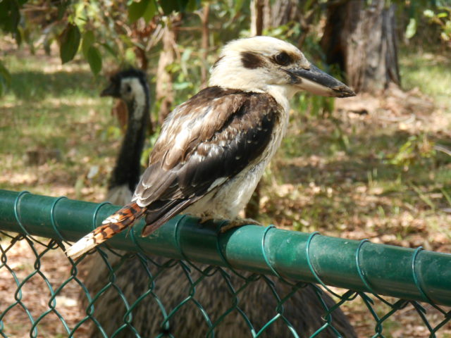 Australia Zoo and Not a Turkey in Sight – Christmas Aussie Style