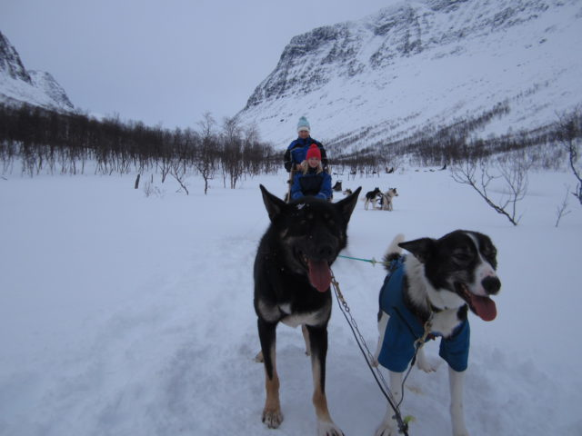 Dog Sledding in Tromso